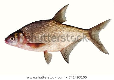 göz · balık · kafa · beyaz - stok fotoğraf © Mps197