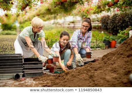 Trois travaux effet de serre fleurs Photo stock © boggy