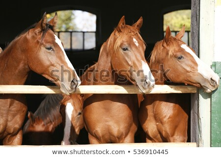 saltando · cavalo · jóquei · arte · saltar · animais - foto stock © jossdiim