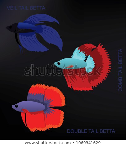 Betta Splendens Fish Types Set Vector Illustration Stock photo © robuart