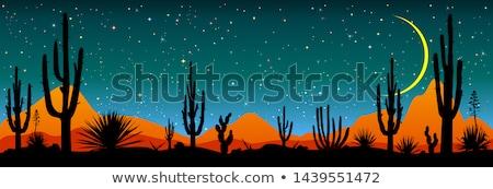 Csillagos éjszaka mexikói sivatag csillagos ég tájkép Stock fotó © liolle