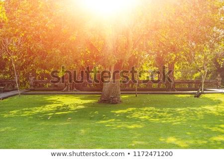 Sacré arbre bali Indonésie lumière du soleil herbe Photo stock © galitskaya