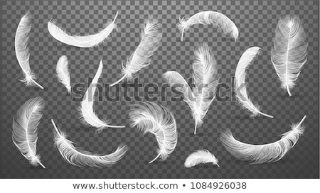 Black Feathers Set Vector. Different Falling Fluffy Twirled Feathers. Isolated Illustration Stock photo © pikepicture
