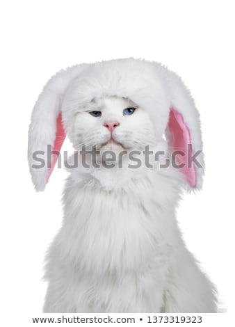 Head shot of cat wearing bunny hat Stock photo © CatchyImages