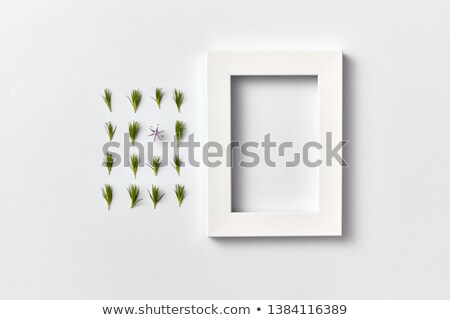 Plant picture of pine twigs needles and empty frame on a light background. Stock photo © artjazz
