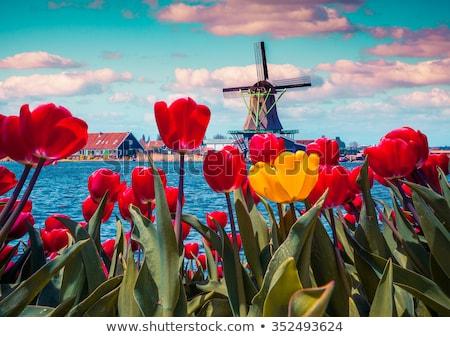 Holland's famous windmills Stock photo © Anna_Om