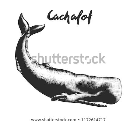 精子 · 鯨 · 海洋 · ほ乳類 · ヴィンテージ · 刻ま - ストックフォト © arkadivna