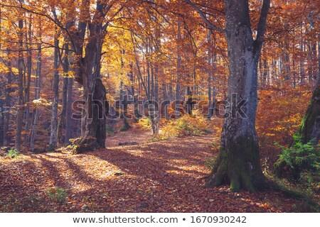 идиллический парка декораций деревья трава лет Сток-фото © prill
