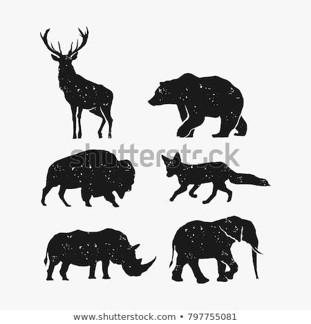 Vintage hand drawn bison emblem Stock photo © Genestro