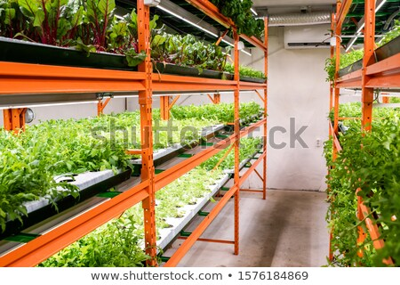 Green seedlings of various kinds and sorts of vegetables growing on shelves Stock photo © pressmaster