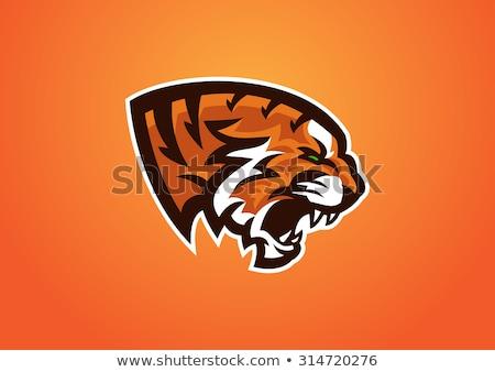 Тигры футбола щит талисман спортивных икона Сток-фото © patrimonio