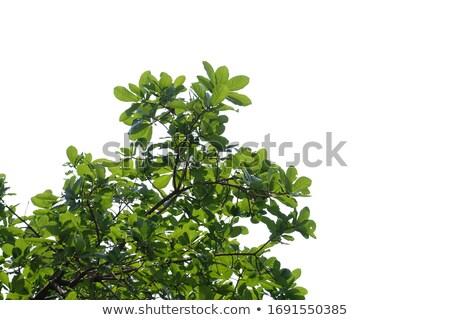 ярко зеленый пышный тропические Буш белый Сток-фото © evgeny89