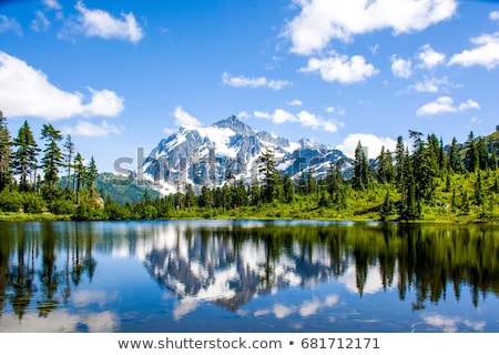 pine branches reflecting in the water stock photo © deyangeorgiev