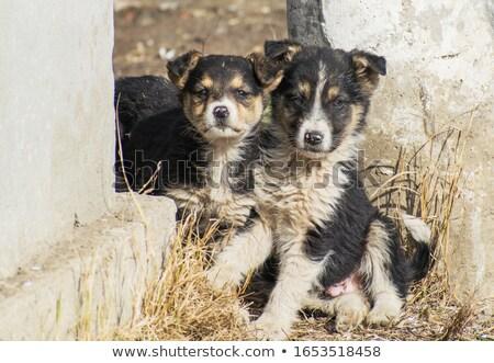 Puppy on street Stock photo © Paha_L