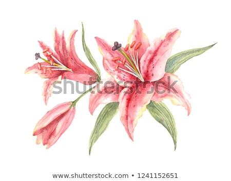 roze · lelie · boeket · geïsoleerd · Blauw · exemplaar · ruimte - stockfoto © lovleah