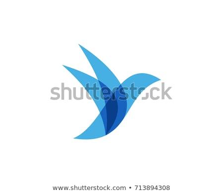 Stock photo: abstract blue bird icon