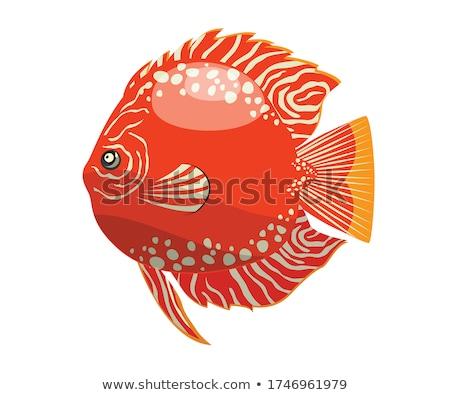 retrato · aquário · natação · olho · peixe - foto stock © cynoclub