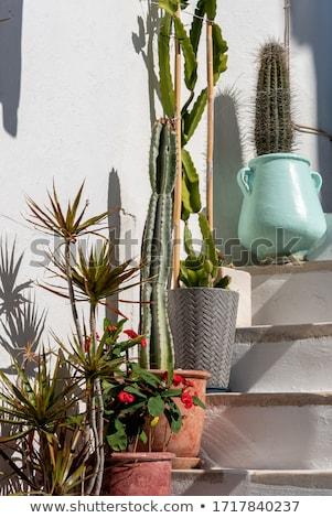 santorin · confortable · terrasse · blanche · ensoleillée · incroyable - photo stock © tannjuska