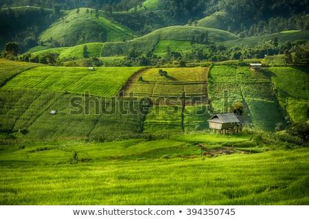 Green mountainous northern plants Stock photo © pzaxe