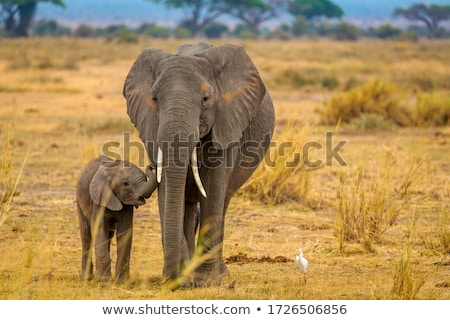 Foto stock: Africano · elefantes · savana · ilustração · isolado · branco