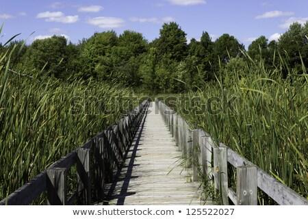 natureza · plantas · caminho · ao · ar · livre · pântano · ninguém - foto stock © bigjohn36