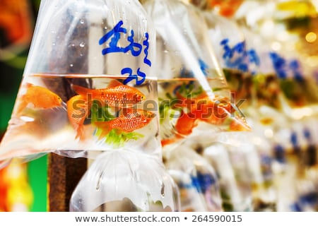 Goldfish mercato Hong Kong piccolo pesce Foto d'archivio © pumujcl