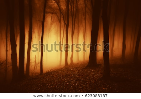 Trail in autumn forest at dawn stock photo © nature78