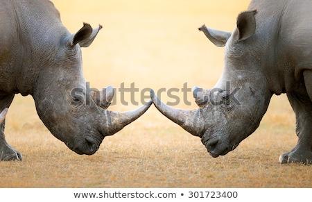 zürafalar · iki · çalı · gökyüzü · sevmek · çapraz - stok fotoğraf © forgiss