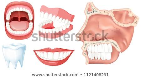 人間 · 顎 · クローズアップ · 図面 · 黒白 · 健康 - ストックフォト © lightsource
