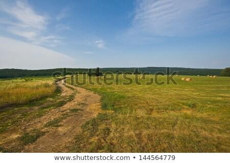 Polnej spektakularny lasu wąski drogowego spadek Zdjęcia stock © gophoto