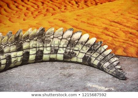подробность Крокодилы хвост реке отражение текстуры Сток-фото © jirivondrous
