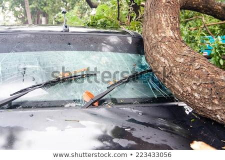 branches broken window Stock photo © sirylok