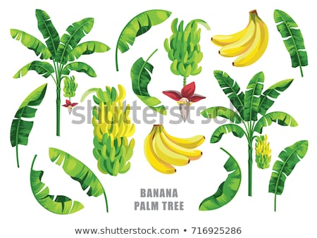 banana · árvore · tiro · monte · bananas - foto stock © thanarat27