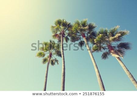 plaj · tropikal · Florida · gün · palmiye · ağaçları · ağaç - stok fotoğraf © arenacreative