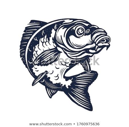 Sazan lezzetli diyet et balık tutma muhteşem Stok fotoğraf © Goruppa