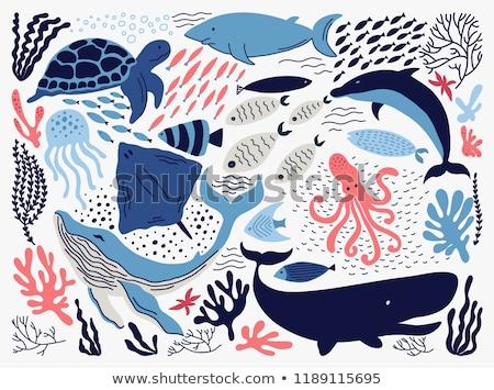 mar · animal · vetor · ícones · coleção · comida - foto stock © naripuru
