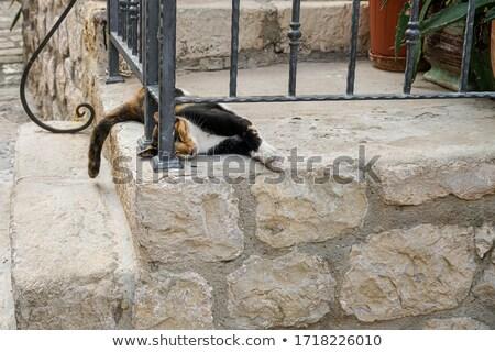 Horvátország turisták macska turista ház utca Stock fotó © master1305