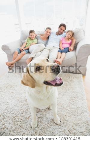 rodziców · dzieci · dywan · labrador · domu · salon - zdjęcia stock © wavebreak_media