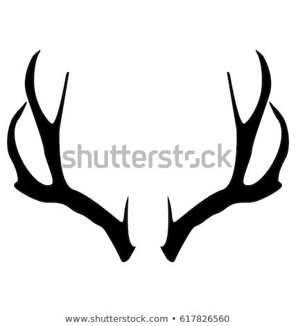 Jeleń · polowanie · trofeum · odizolowany · biały - zdjęcia stock © digifoodstock