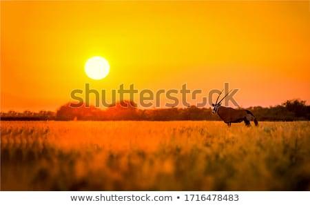 Gazelle coucher du soleil illustration arbre nature lac Photo stock © adrenalina