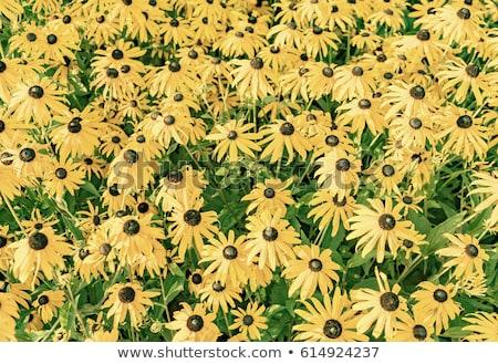 цветочный · выстрел · оранжевый · цветок · медицина - Сток-фото © meinzahn