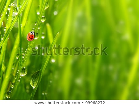 Coccinelle insecte usine feuille macro paysages Photo stock © cienpies