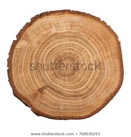 Przekrój odizolowany drzewo pierścień Zdjęcia stock © smuki