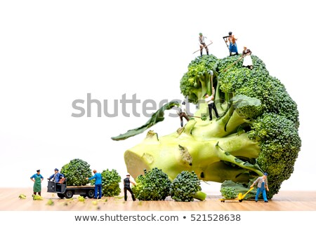 Farmers harvesting broccoli crown and loading truck Stock photo © Kirill_M