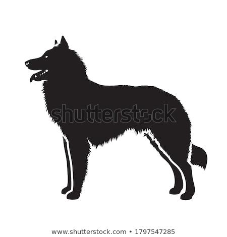 Köpek ayakta güneş portre karanlık Stok fotoğraf © AvHeertum