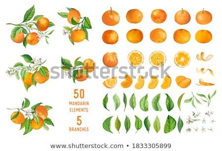Frischen Kalk Früchte Querschnitt ganze Essen Stock foto © Digifoodstock