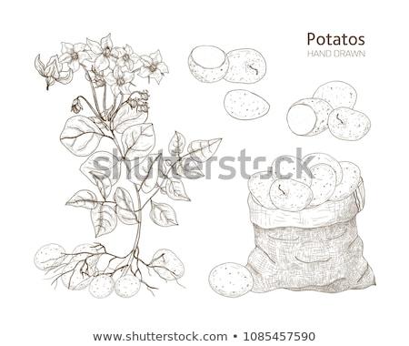 все картофеля завода продовольствие Сток-фото © Digifoodstock