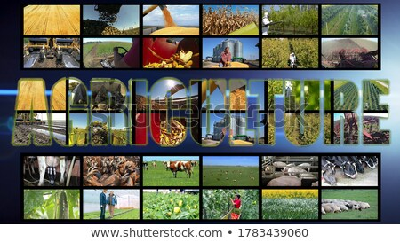 Sugar beet farming in agriculture photo collage Stock photo © stevanovicigor