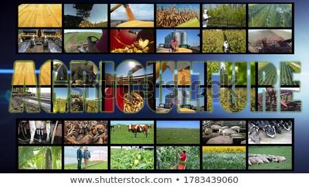 sugar beet farming in agriculture photo collage stock photo © stevanovicigor
