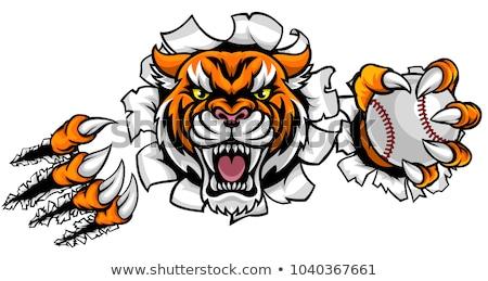 тигр бейсбольной мяча сердиться животного Сток-фото © Krisdog